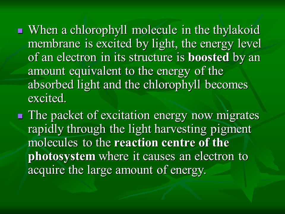 When a chlorophyll molecule in the thylakoid membrane is excited by light, the energy level of an electron in its structure is boosted by an amount equivalent to the energy of the absorbed light and the chlorophyll becomes excited.