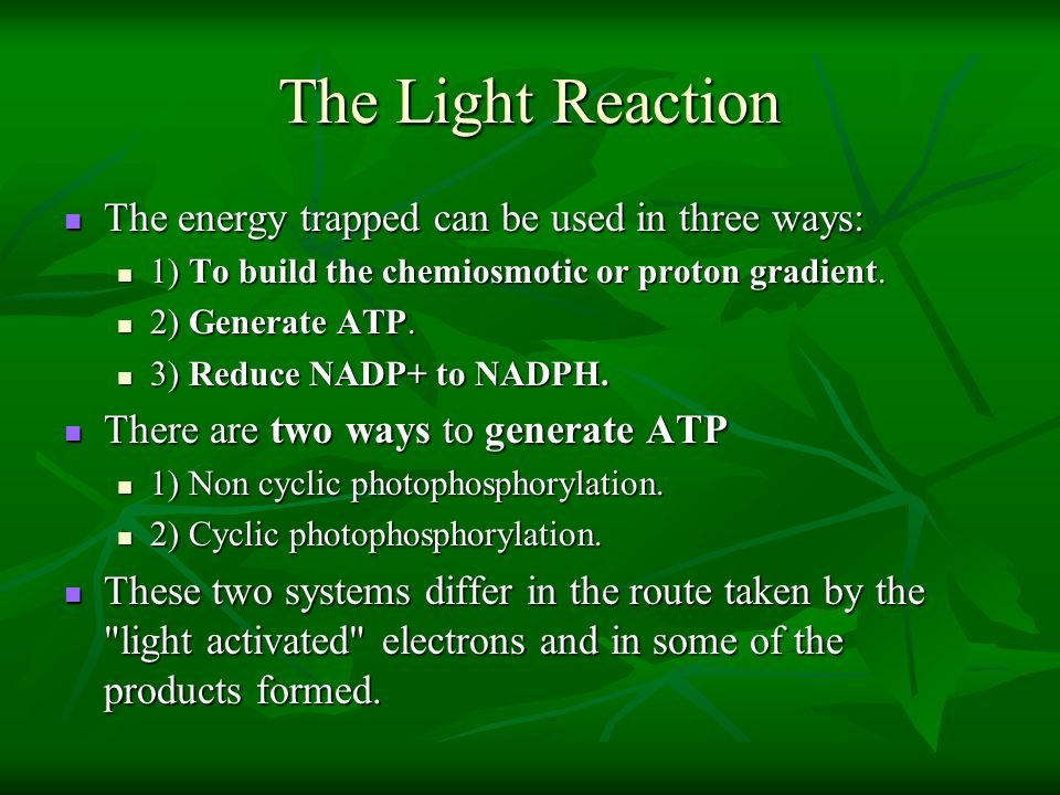 The Light Reaction The energy trapped can be used in three ways: