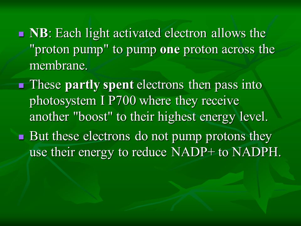 NB: Each light activated electron allows the proton pump to pump one proton across the membrane.