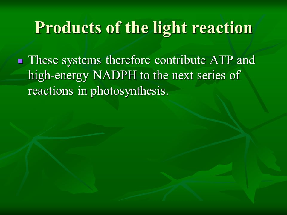 Products of the light reaction