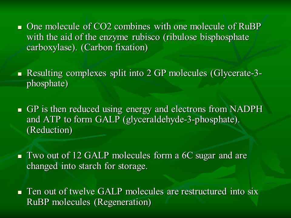 One molecule of CO2 combines with one molecule of RuBP with the aid of the enzyme rubisco (ribulose bisphosphate carboxylase). (Carbon fixation)