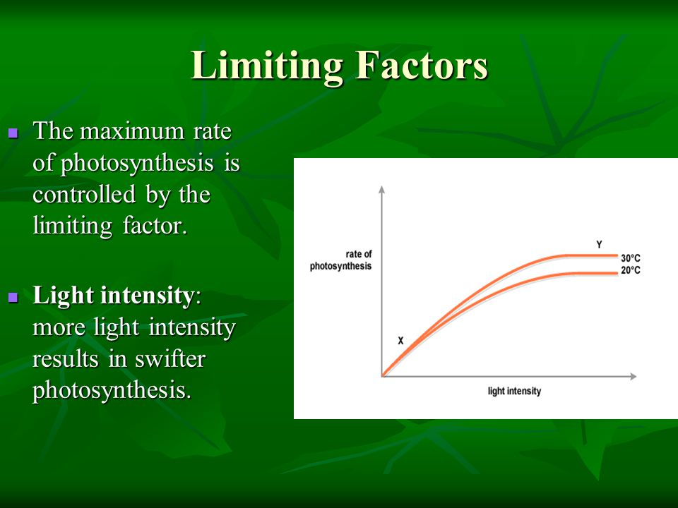 Limiting Factors The maximum rate of photosynthesis is controlled by the limiting factor.