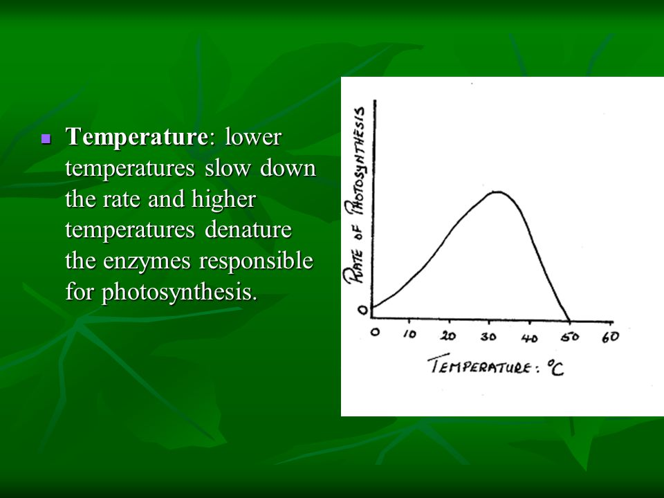 Temperature: lower temperatures slow down the rate and higher temperatures denature the enzymes responsible for photosynthesis.
