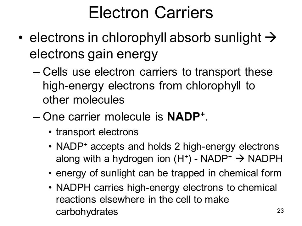 Electron Carriers electrons in chlorophyll absorb sunlight  electrons gain energy.