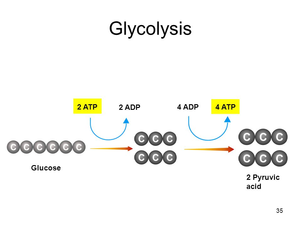 Glycolysis 2 ATP 2 ADP 4 ADP 4 ATP Glucose 2 Pyruvic acid