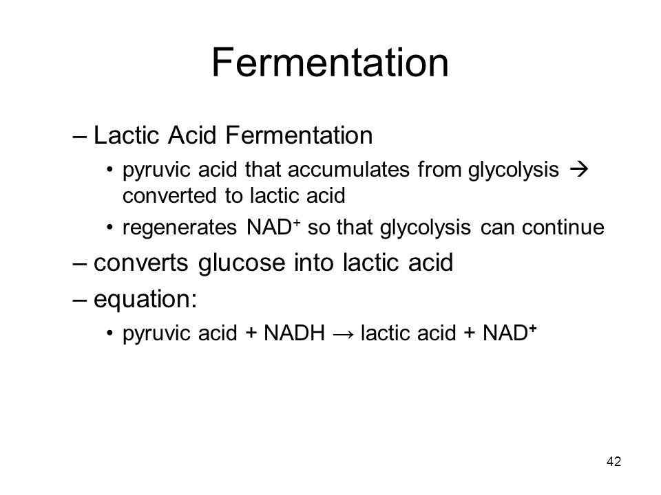Fermentation Lactic Acid Fermentation
