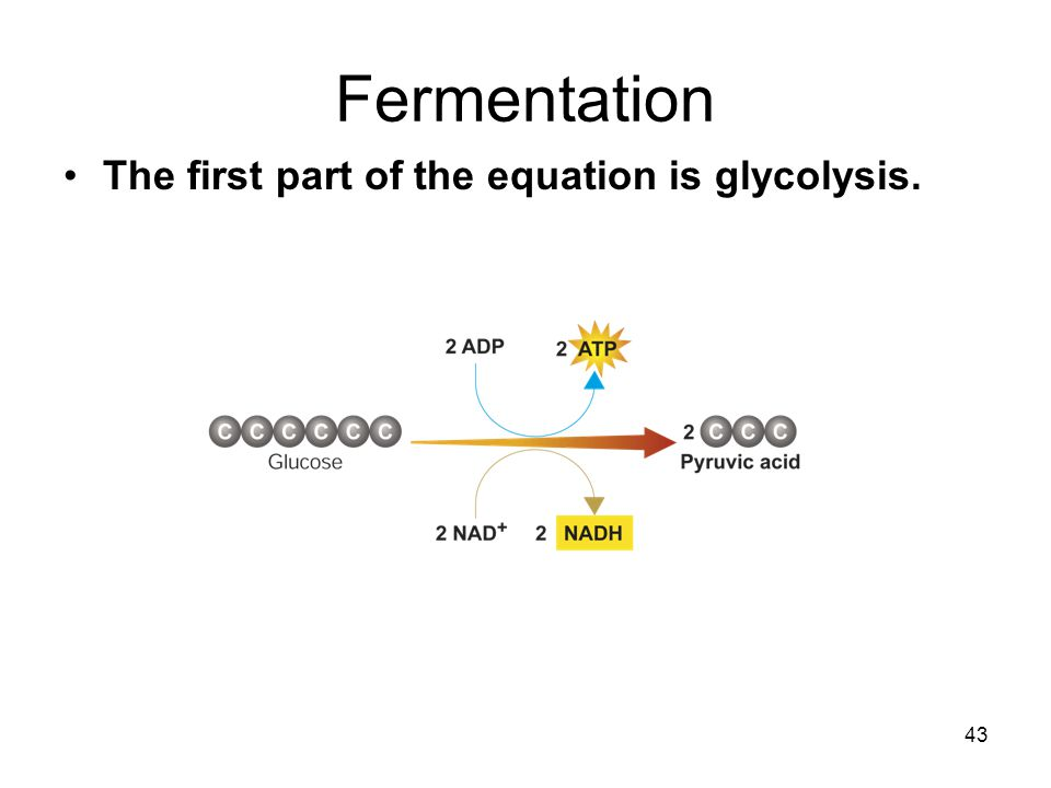 Fermentation The first part of the equation is glycolysis.