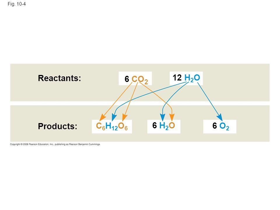 Reactants: 6 CO2 12 H2O Products: C6H12O6 6 H2O 6 O2 Fig. 10-4