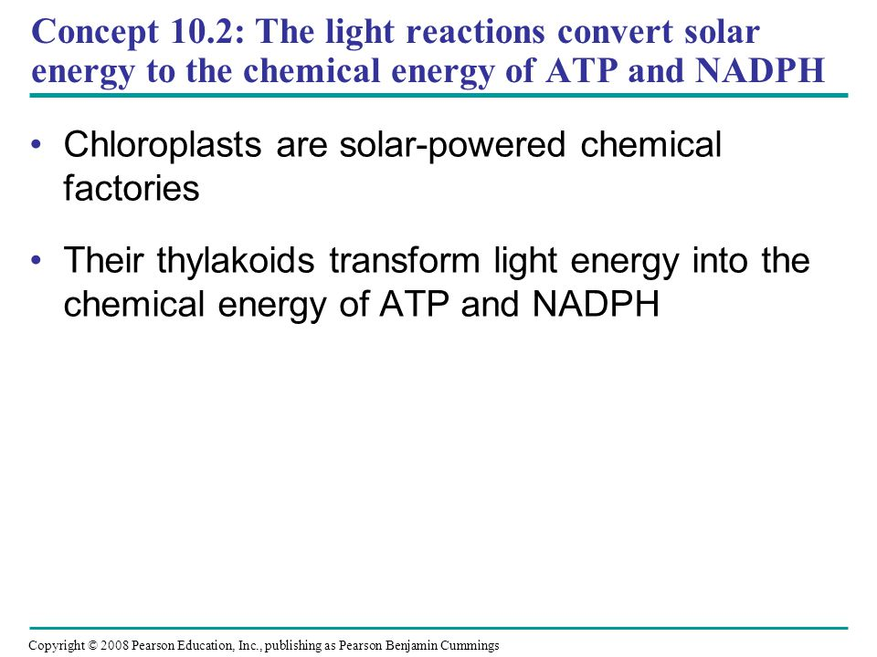 Chloroplasts are solar-powered chemical factories