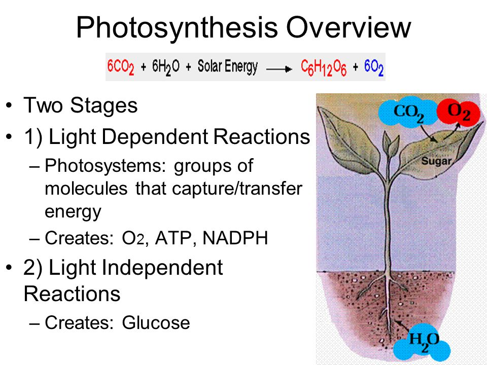 Photosynthesis Overview