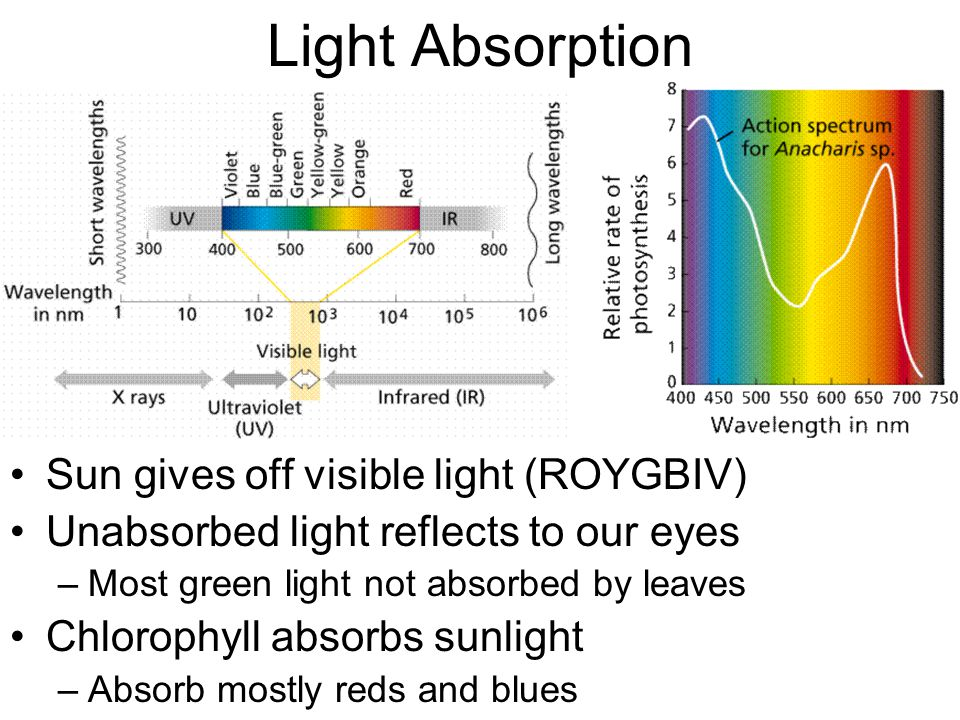 Light Absorption Sun gives off visible light (ROYGBIV)