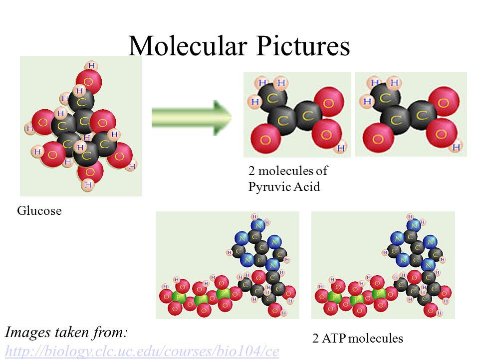 Molecular Pictures 2 molecules of Pyruvic Acid. Glucose. Images taken from: http://biology.clc.uc.edu/courses/bio104/cellresp.htm.