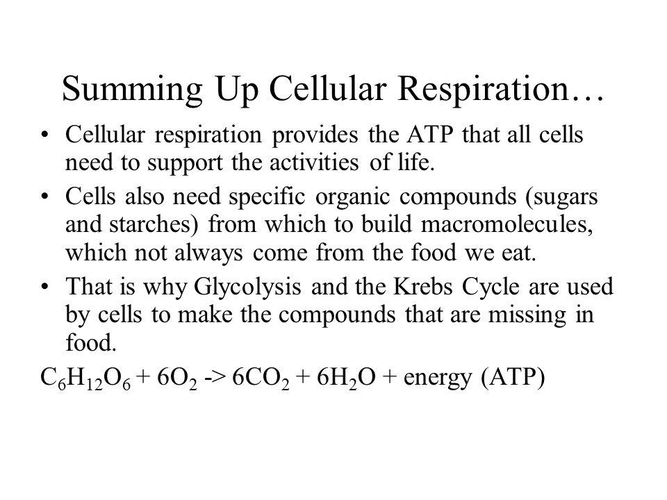 Summing Up Cellular Respiration…
