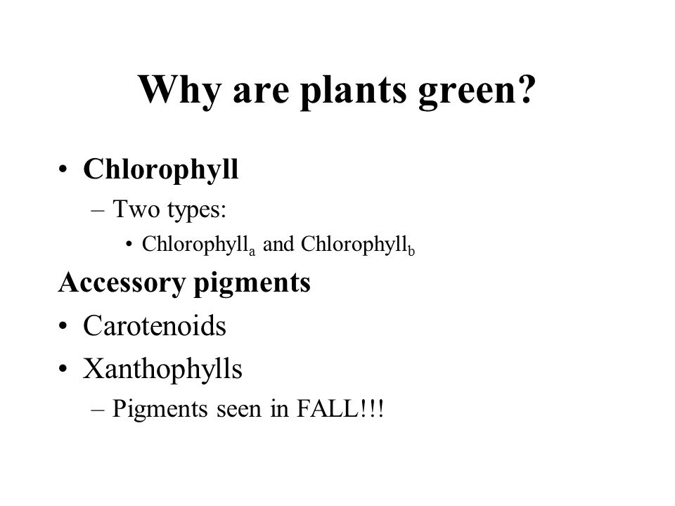 Why are plants green Chlorophyll Accessory pigments Carotenoids