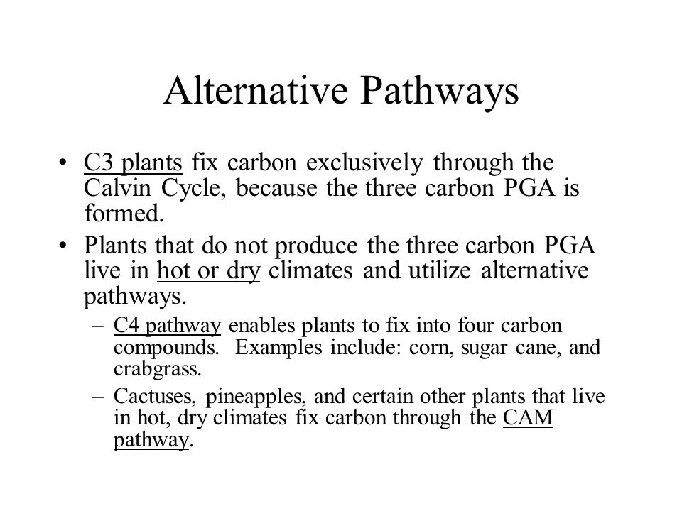 Alternative Pathways C3 plants fix carbon exclusively through the Calvin Cycle, because the three carbon PGA is formed.
