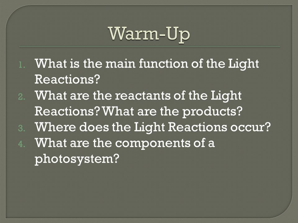 Warm-Up What is the main function of the Light Reactions