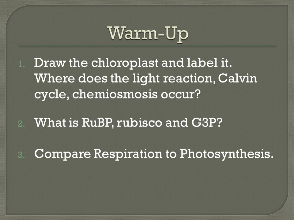 Warm-Up Draw the chloroplast and label it. Where does the light reaction, Calvin cycle, chemiosmosis occur