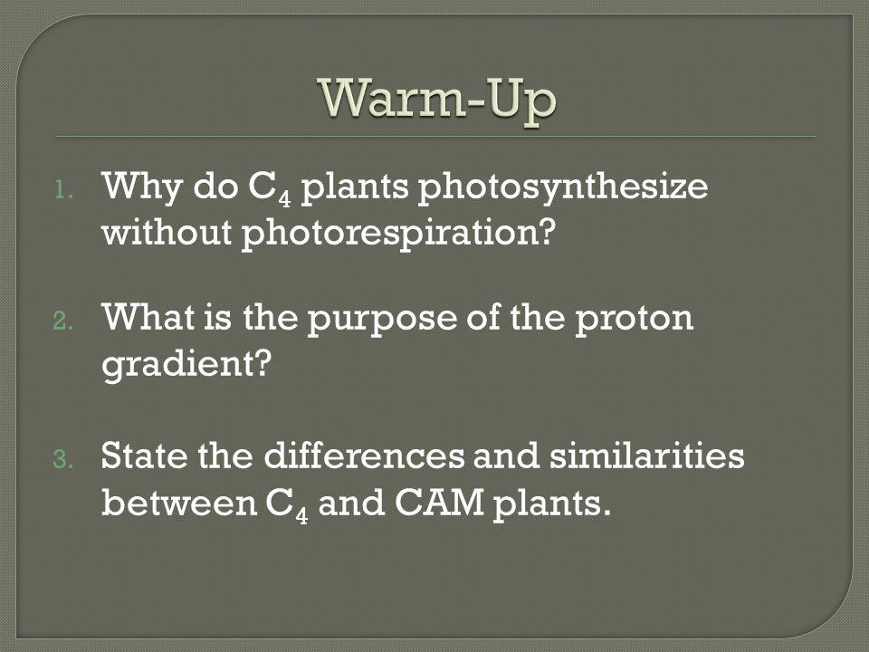 Warm-Up Why do C4 plants photosynthesize without photorespiration