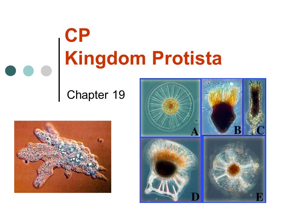 CP Kingdom Protista Chapter 19