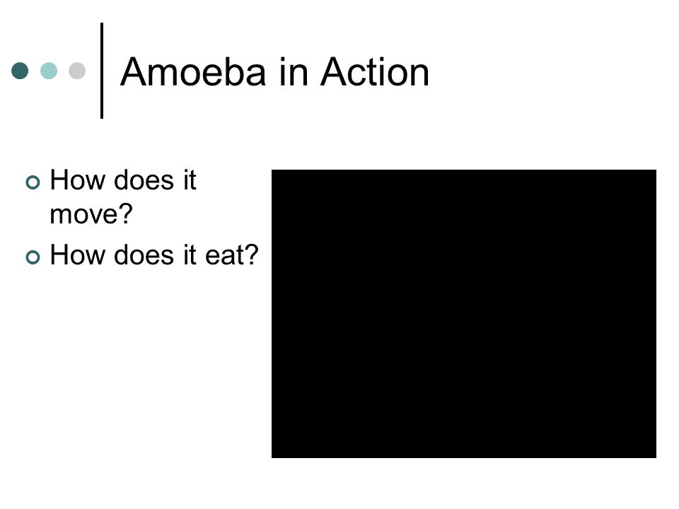 Amoeba in Action How does it move How does it eat