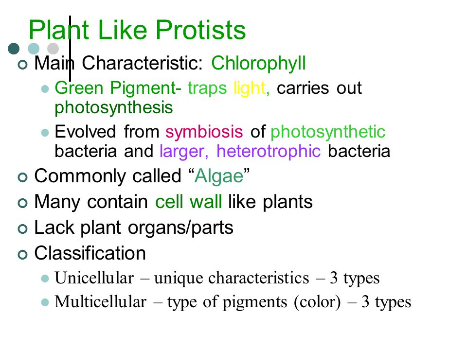 the main characteristics of the protista group Some of these protista are predators and feed on bacteria and other protista, ie they feed on dead organic matter, while others are parasites that exploit the resources of several organisms they can be divided into three main groups depending on how they move.
