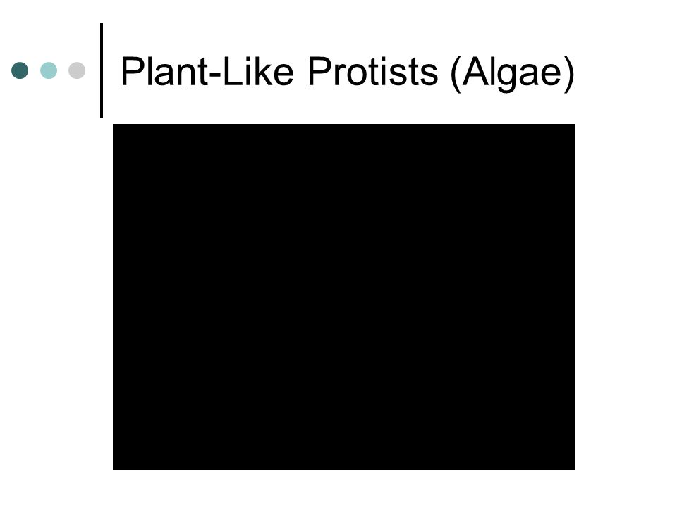 Plant-Like Protists (Algae)