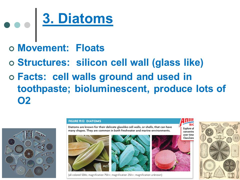 3. Diatoms Movement: Floats Structures: silicon cell wall (glass like)