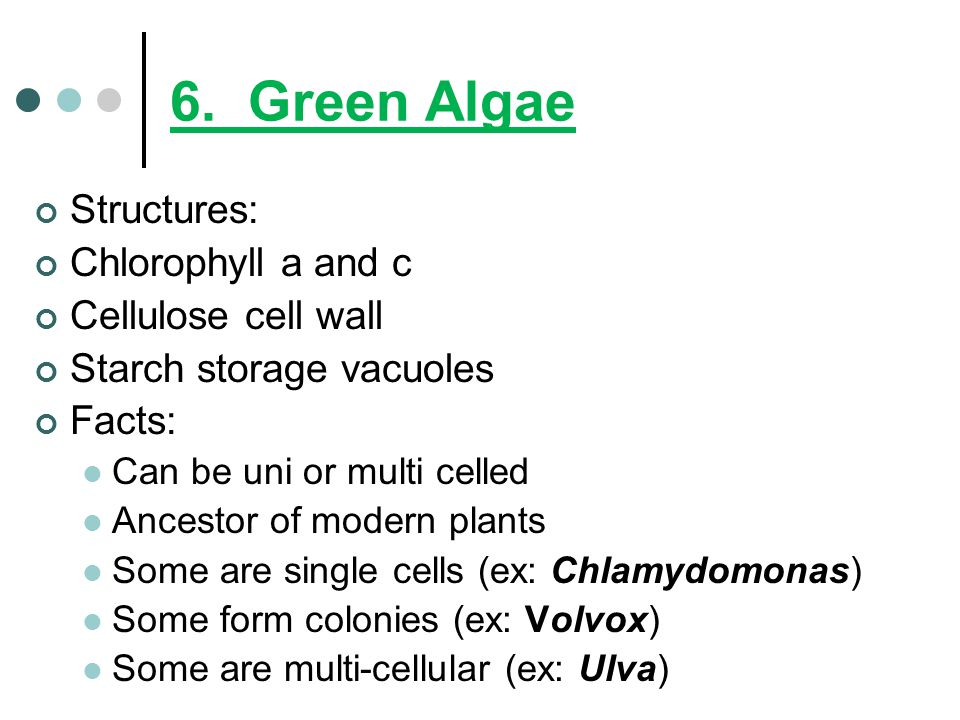 6. Green Algae Structures: Chlorophyll a and c Cellulose cell wall