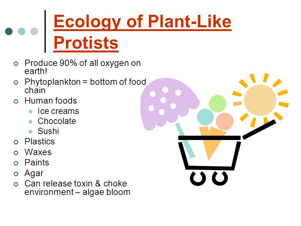 Ecology of Plant-Like Protists