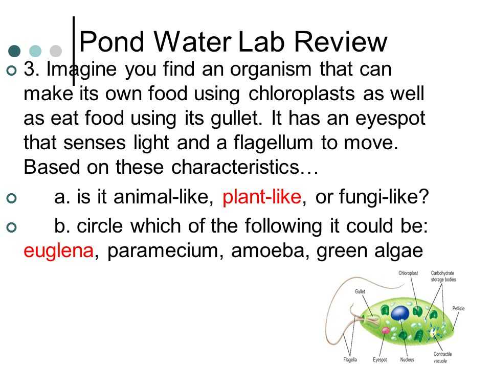 Pond Water Lab Review
