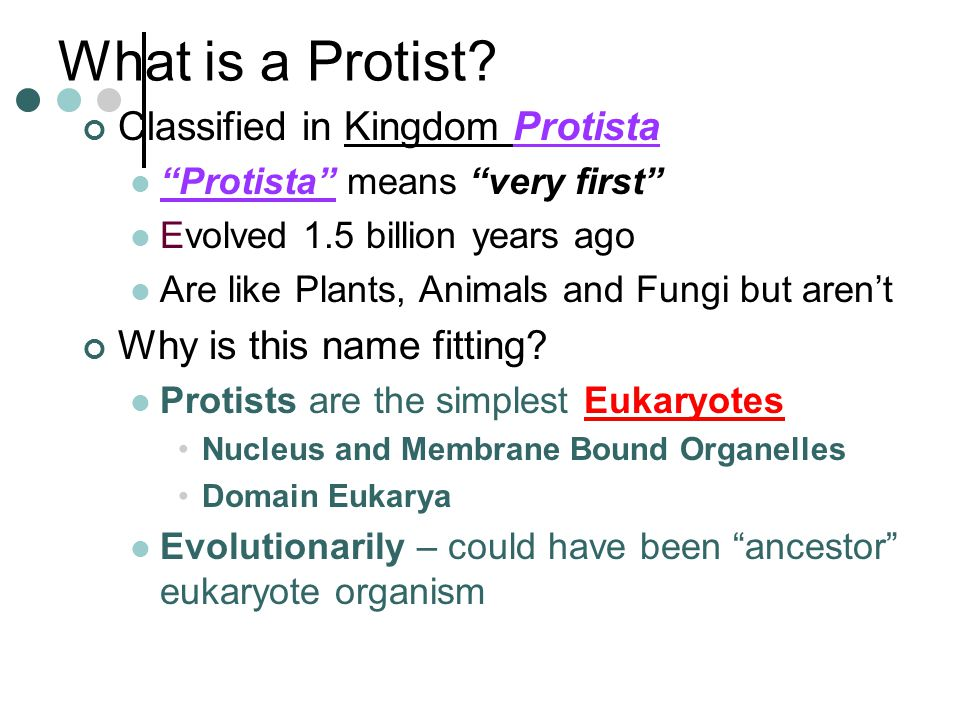 What is a Protist Classified in Kingdom Protista