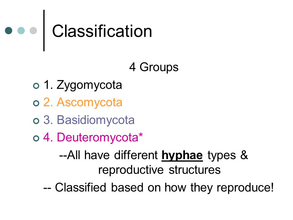 --All have different hyphae types & reproductive structures