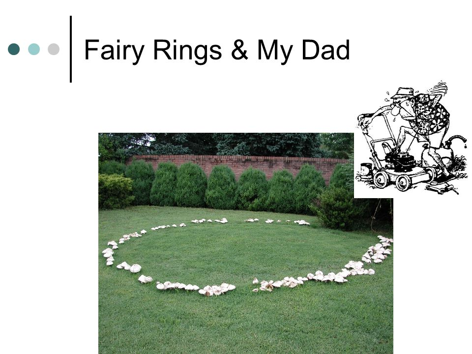 Fairy Rings & My Dad