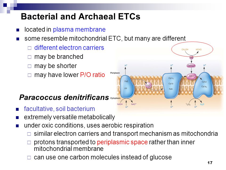 Bacterial and Archaeal ETCs