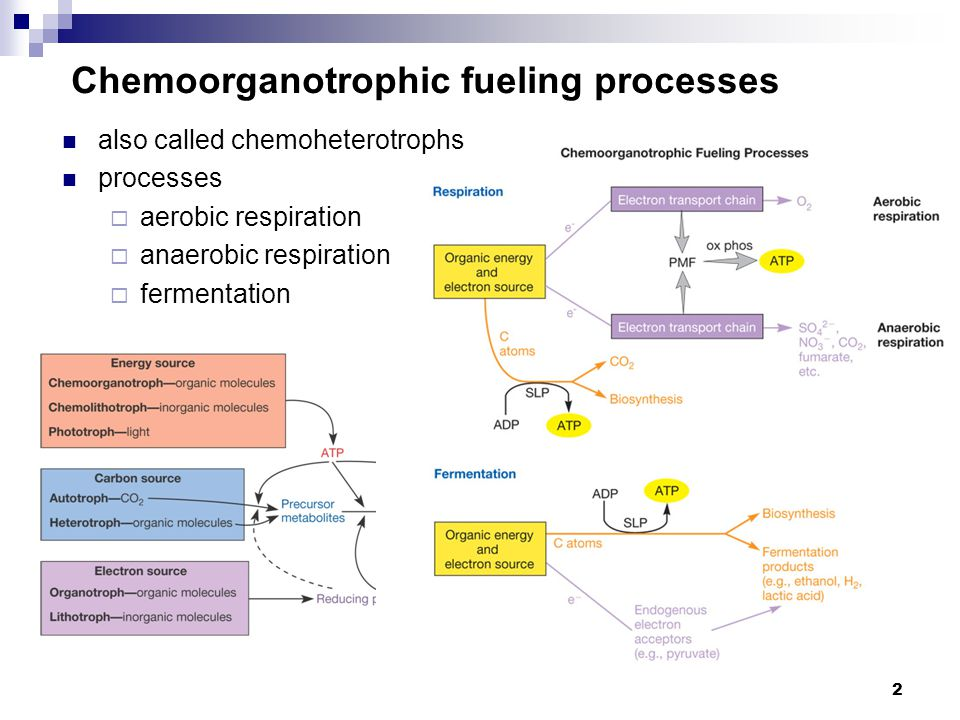 Chemoorganotrophic fueling processes