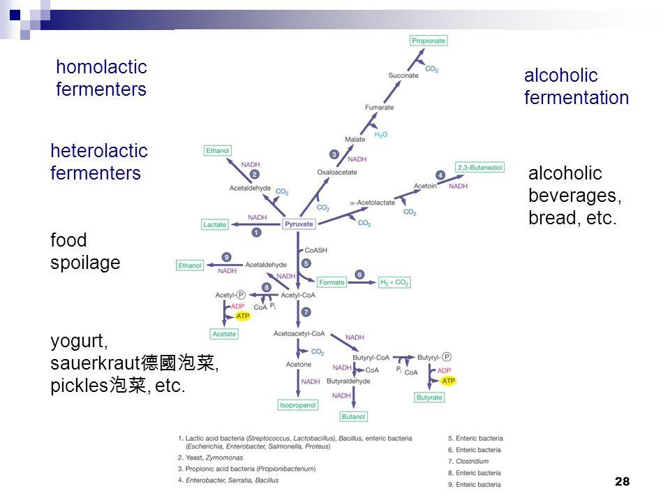 homolactic fermenters. alcoholic. fermentation. heterolactic. fermenters. alcoholic. beverages,
