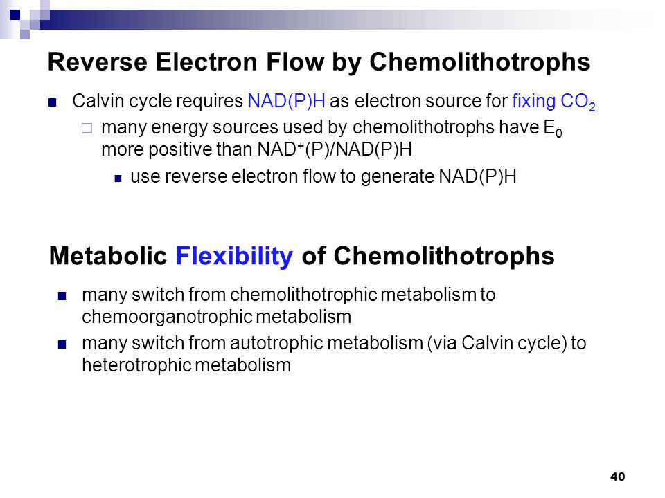 Reverse Electron Flow by Chemolithotrophs