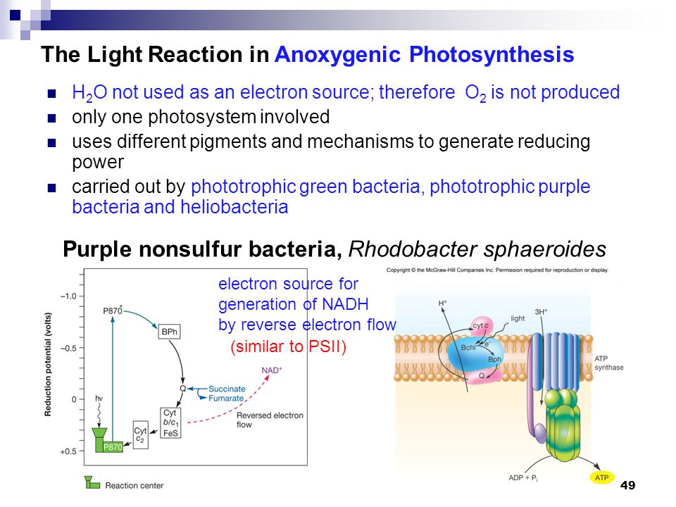 anoxygenic photosynthesis What is the difference between oxygenic and anoxygenic photosynthesis both photosystem i and ii are used in the oxygenic photosynthesis only photosystem.