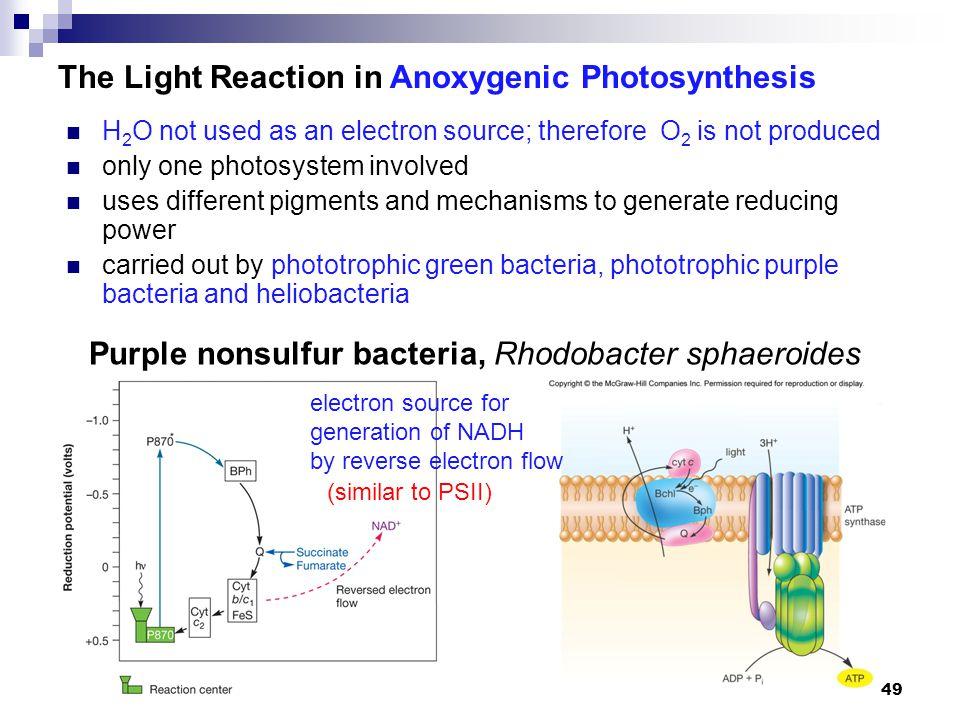 Purple nonsulfur bacteria, Rhodobacter sphaeroides