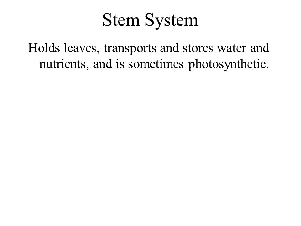 Stem System Holds leaves, transports and stores water and nutrients, and is sometimes photosynthetic.