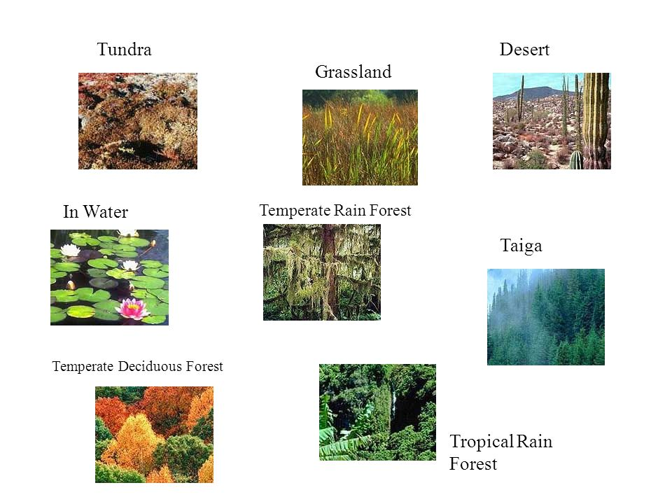Tundra Desert Grassland In Water Taiga Tropical Rain Forest