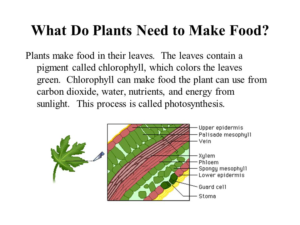 What Do Plants Need to Make Food