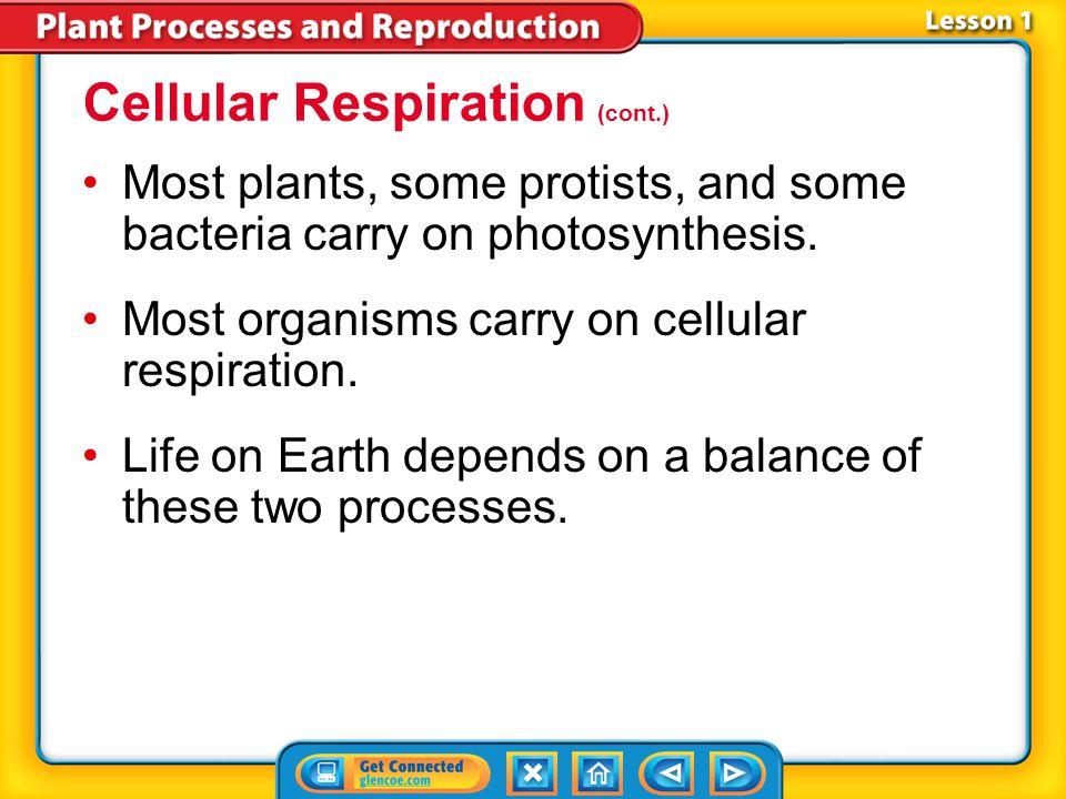 Cellular Respiration (cont.)