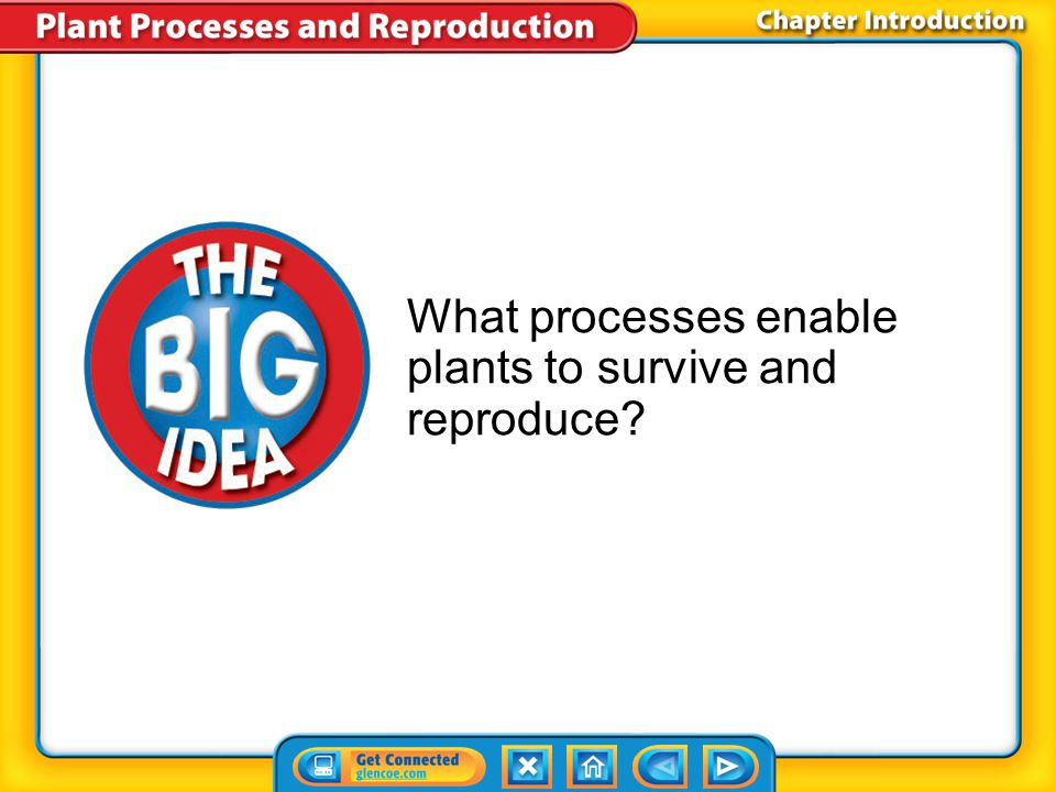 What processes enable plants to survive and reproduce