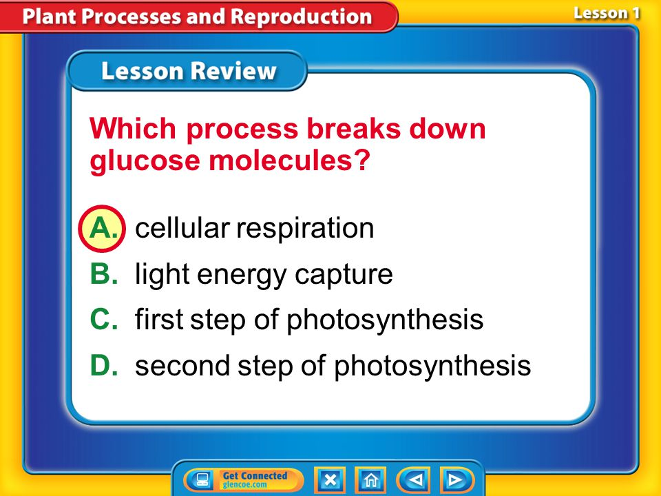 Which process breaks down glucose molecules
