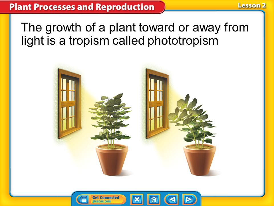 The growth of a plant toward or away from light is a tropism called phototropism