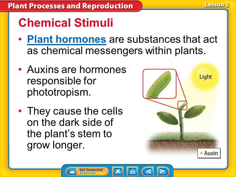 Chemical Stimuli Plant hormones are substances that act as chemical messengers within plants. Auxins are hormones responsible for phototropism.