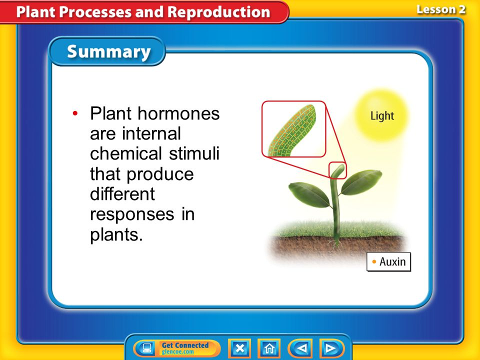 Plant hormones are internal chemical stimuli that produce different responses in plants.