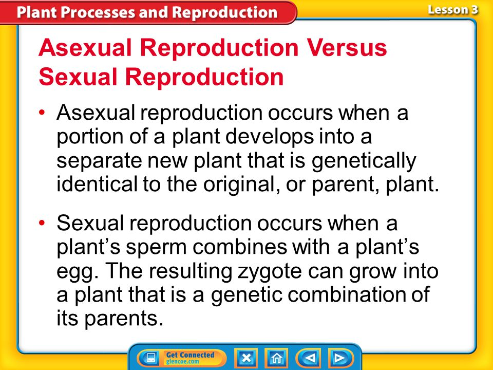 Asexual Reproduction Versus Sexual Reproduction