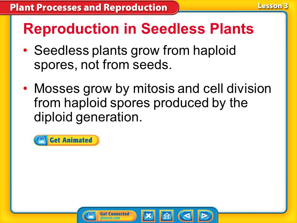 Reproduction in Seedless Plants